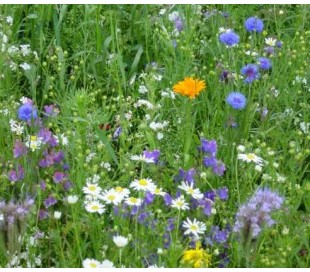 Blomstermark blanding, 200g (t. 50 m2)