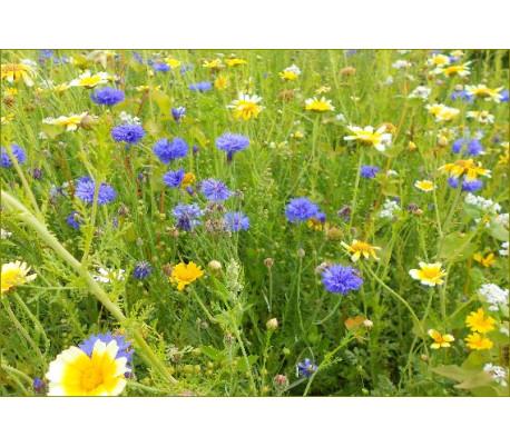 Spiselig blomsterblanding, 200g (t. 50 m2)