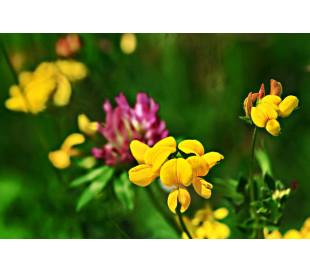 Blomsterblanding, modelfoto