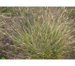 Kystnær Blanding (500 g) - natureng