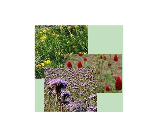 Blomsterblanding, 3 slags frø
